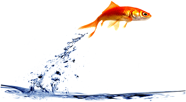 jumping-fish1 Acquire [ Native Advertising ]